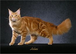 Red Classic Tabby Cat Colors Tabby Kittens Cutest
