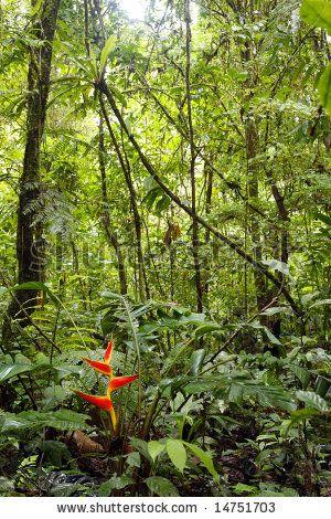 The Amazon Rainforest Brazil Amazon Rainforest Amazon Forest
