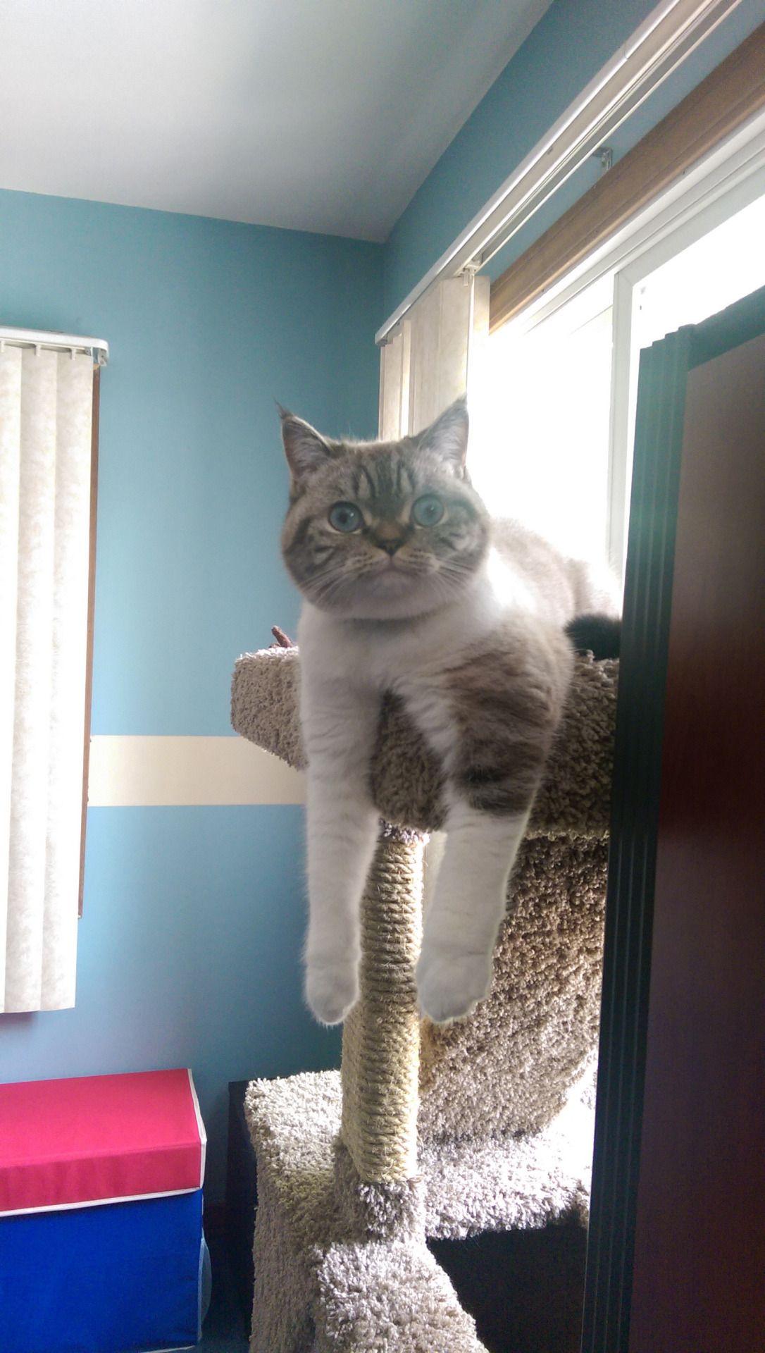Xlolliqueenx Cats Crazy Cats Animals