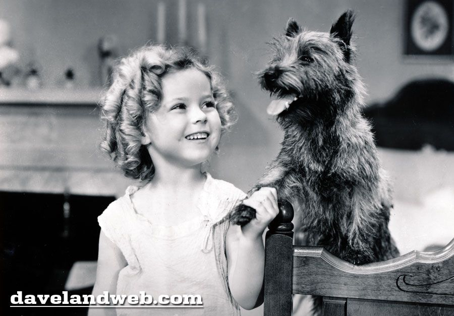 Screen Gem Saturdays Shirley Had Toto First Shirley Temple