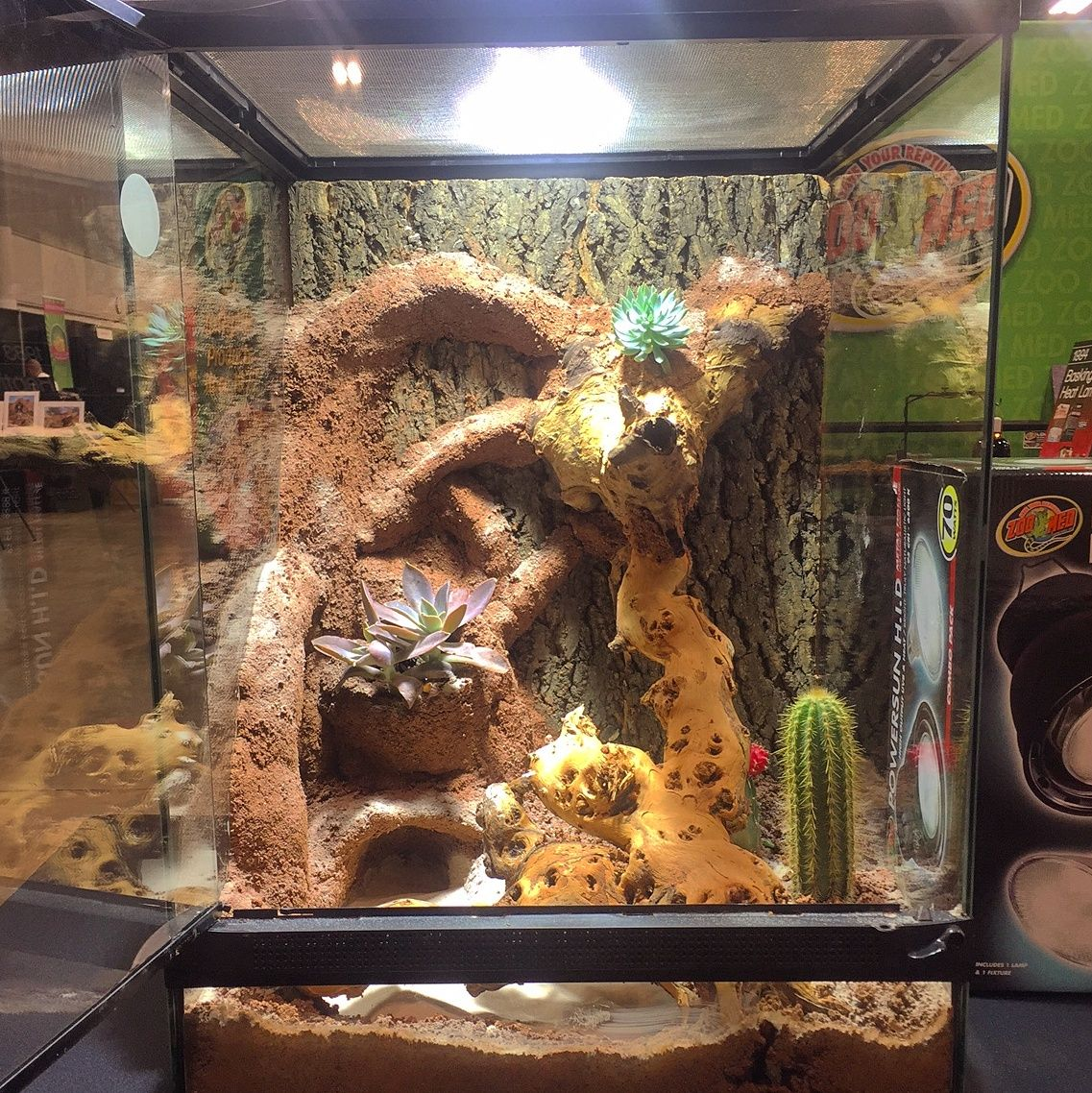 Desert Terrarium Made With Zoo Med Excavator Clay And