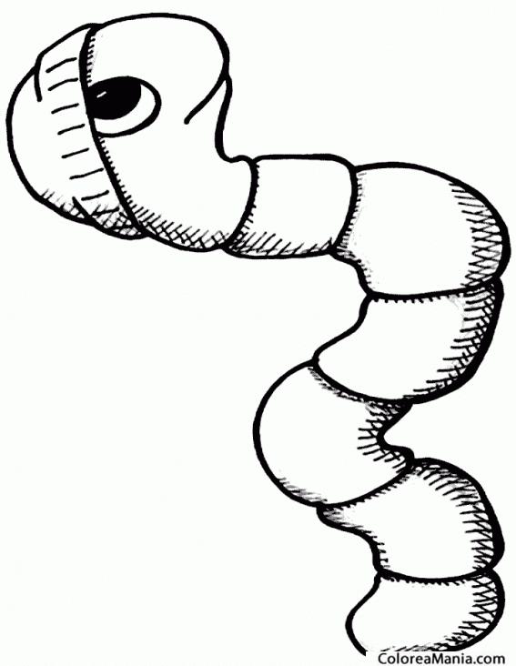 Resultado De Imagen Para Dibujo Gusano Dibujos Para Colorear