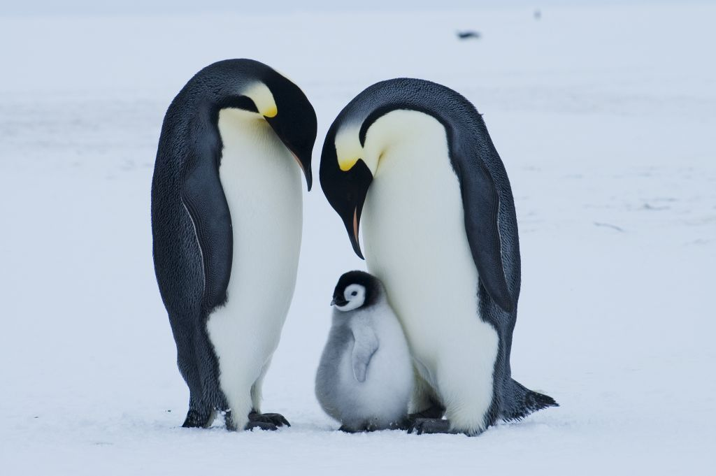 15 Amazing Animals That Start With The Letter E Pingouin Manchot Animaux
