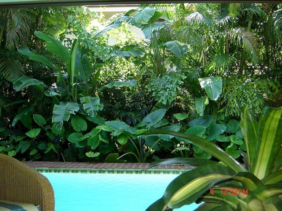 Florida Tropical Landscaping Ideas Backyard Pool Landscaping Tropical Landscaping Tropical Backyard