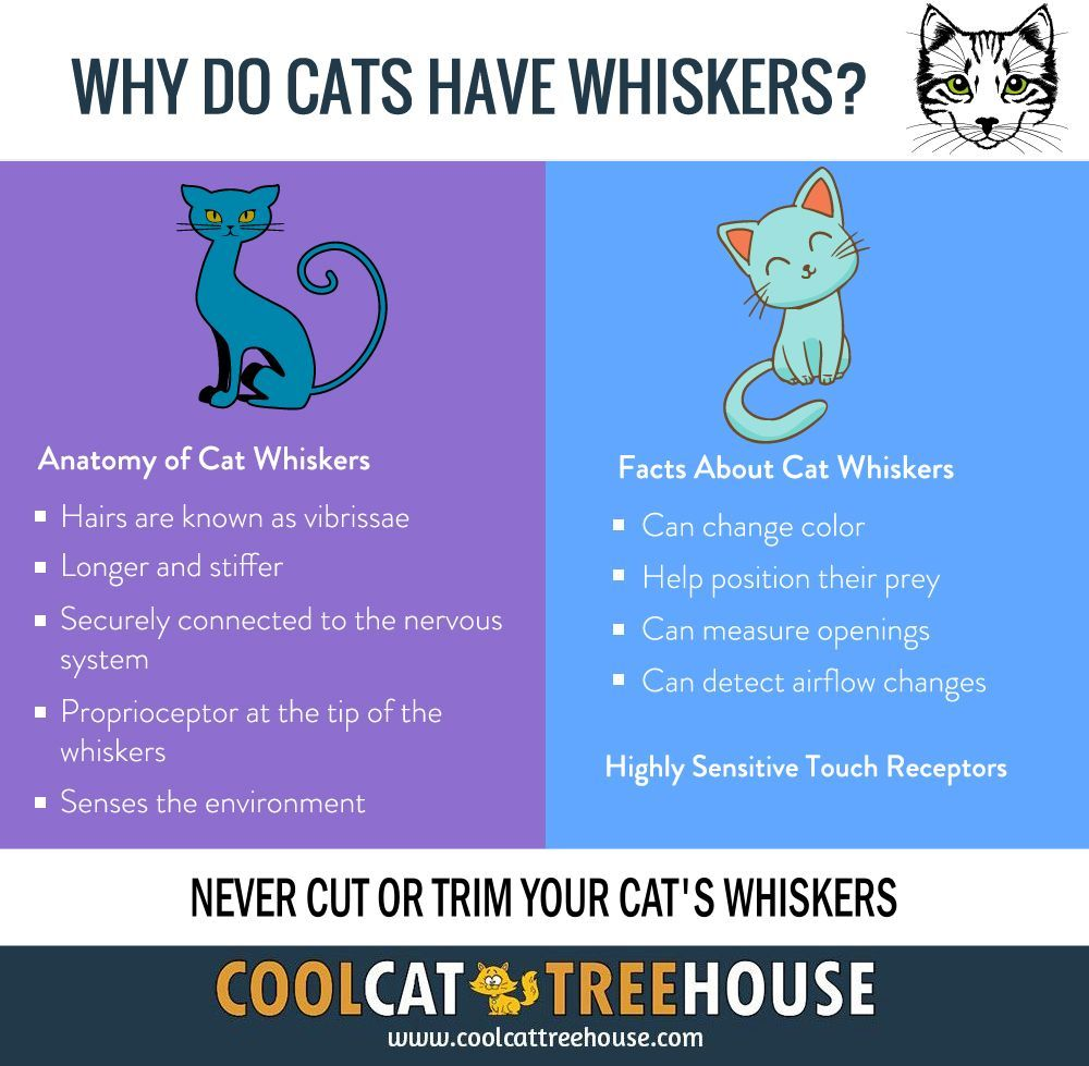 Why Do Cats Have Whiskers Cool cat trees, Cat tree house