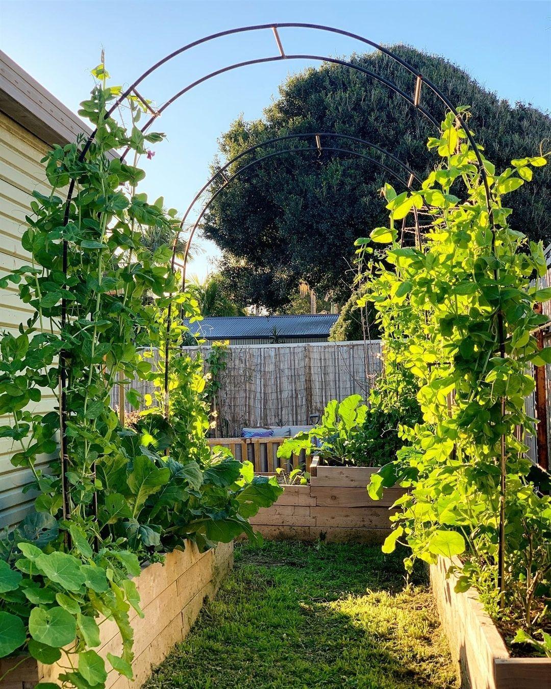 Folgt Mir Garten Verliebt Fur Tagliche Posts Mit Tollen Gartenbildern Wenn Ihr Fragen Oder Anregungen Habt Dann Sendet Mir Doch Garden Plants