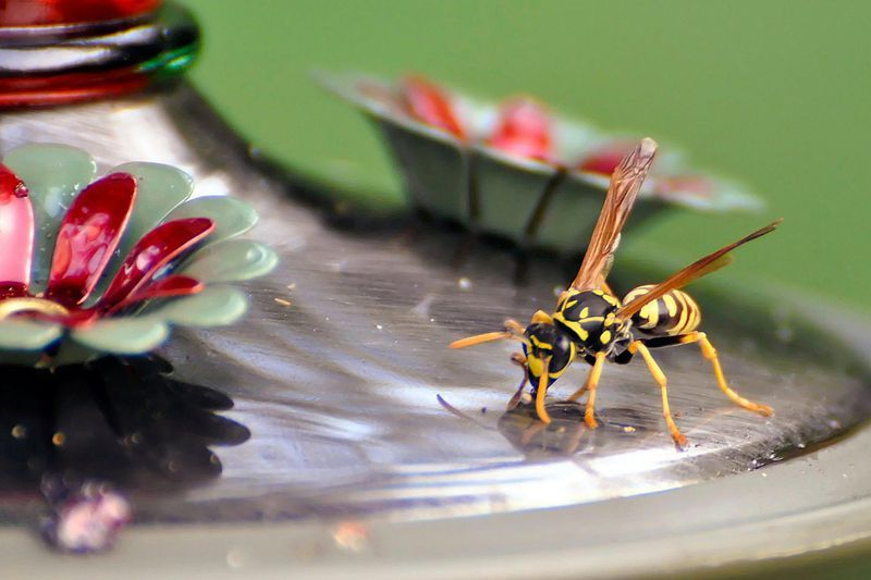 Keep Bees, Wasps, and Other Insects Away From Hummingbird