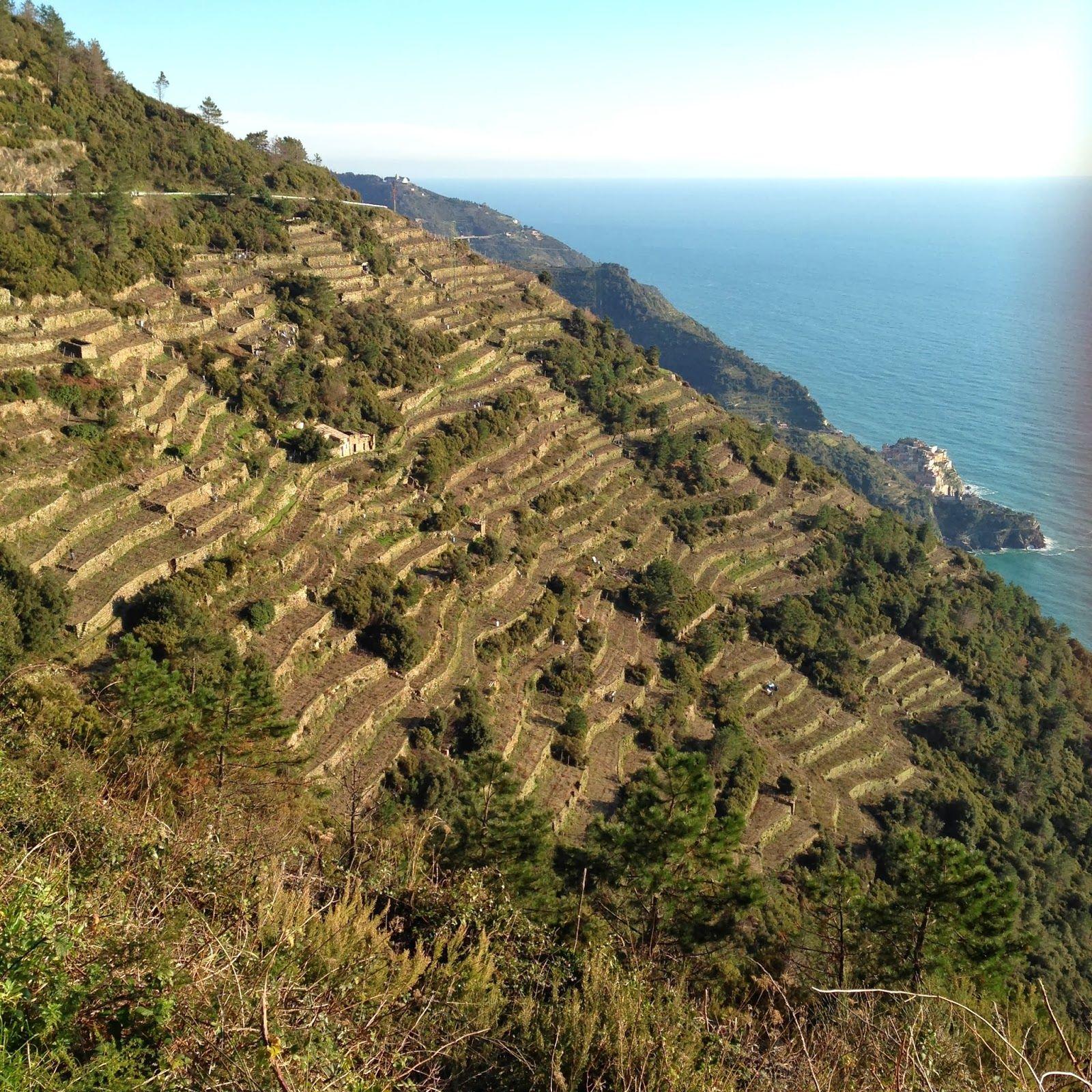 Cinque Terre - i famosi terrazzamenti, l\'unico modo per coltivare in ...