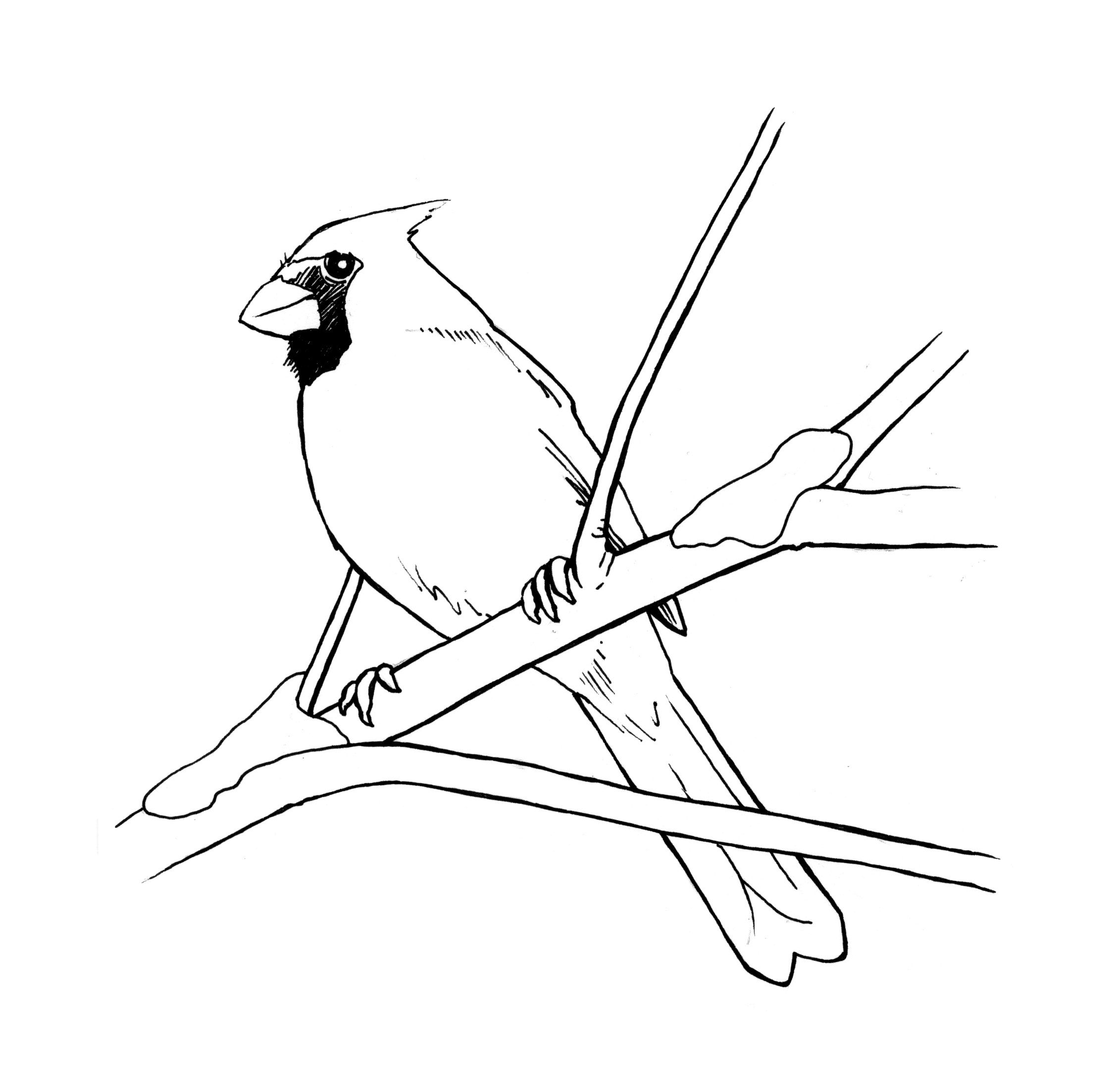 Rustic Christmas Cards And Freebies Bird Coloring Pages Silhouette Clip Art Cardinal Tattoos