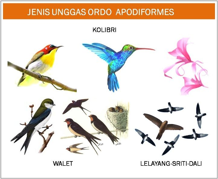 Jenis Macam Gambar Burung Gambar Hewan Gambar Burung Hewan