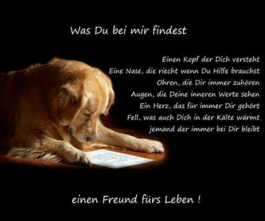 hunde sprüche liebe Was du bei einem Hund findest❤ | Berner Senn  und andere Hunde  hunde sprüche liebe