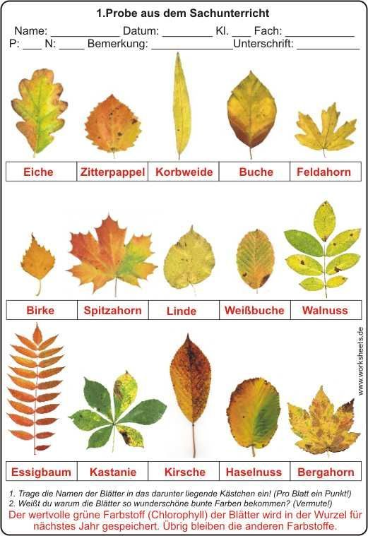 Blätter im Herbst | német | Pinterest | Kindergarten, Montessori and ...