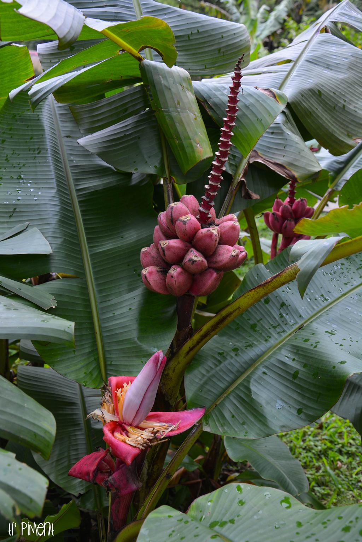 martinique : le parc d'emeraude et balade en forêt tropicale