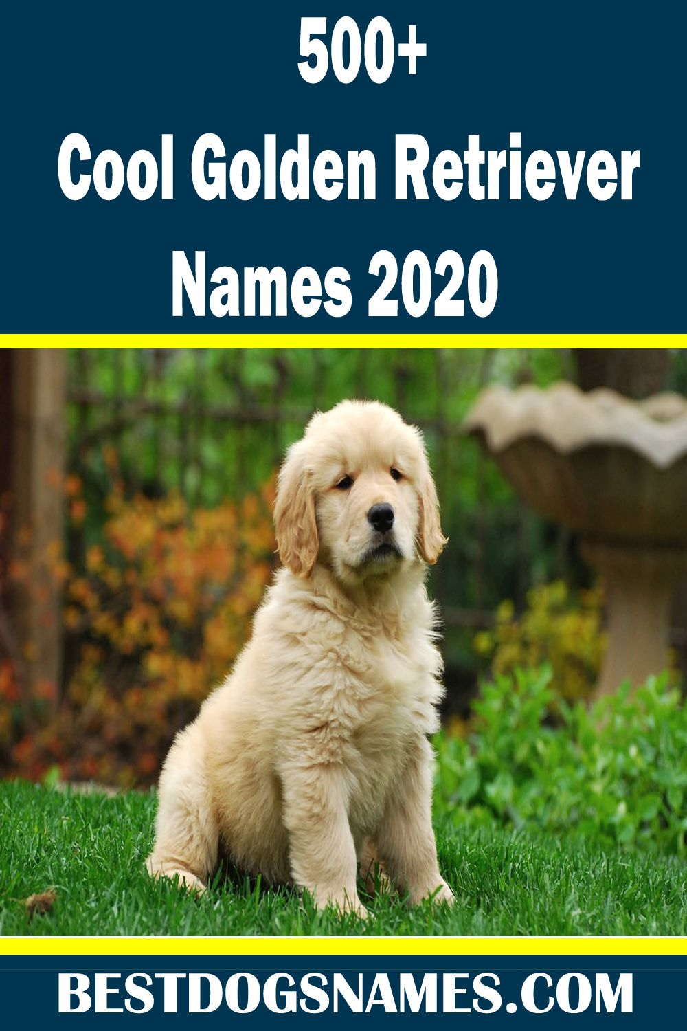 Cute Dog Names Should Be As Special As Your Best Cute Dog Names