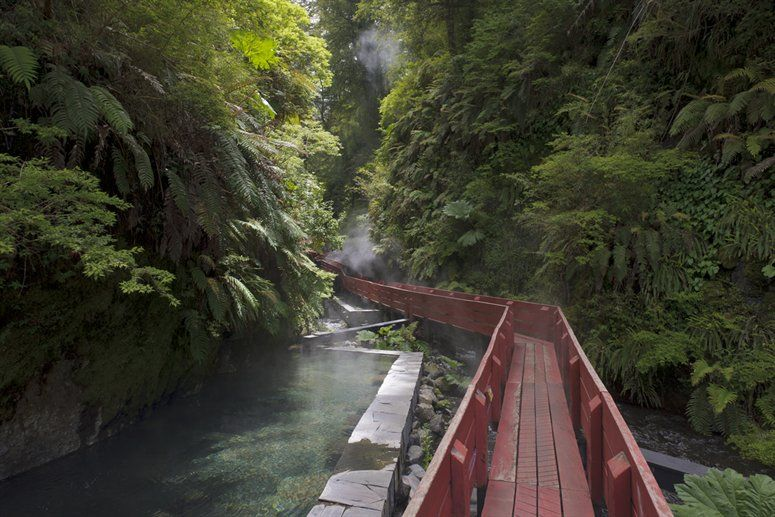 elevated walkway through hot springs @ Hotel Antumalal, Chile's modernist rainforest resort
