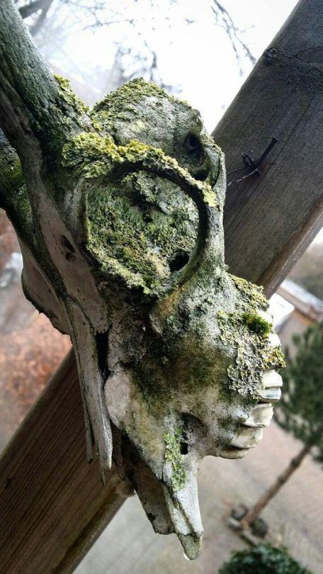 Beautiful lichen - #art #culture #lichen #nature #skull #skulls #vulture