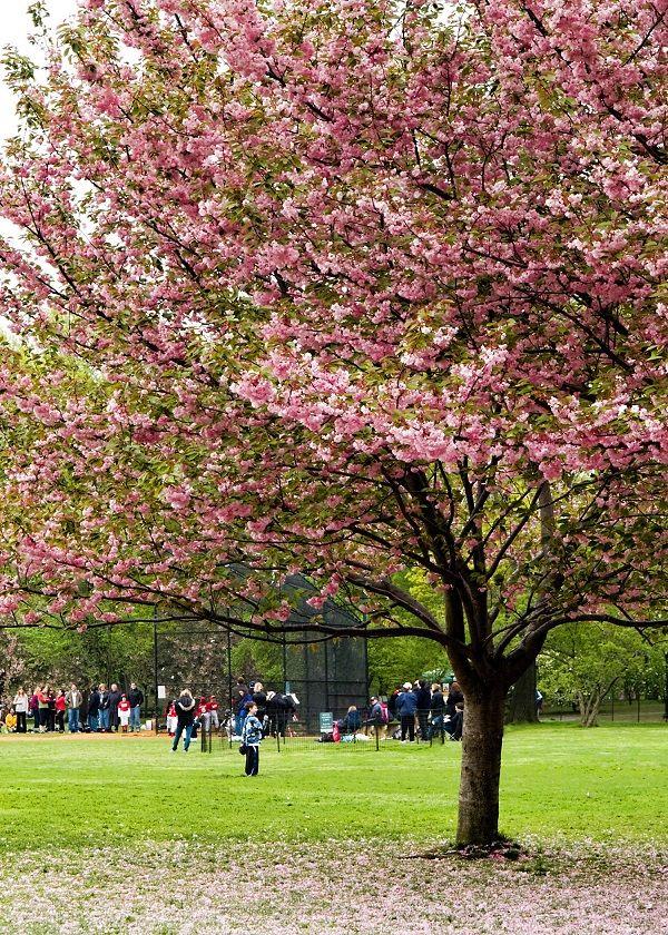 Enjoy in Central Park