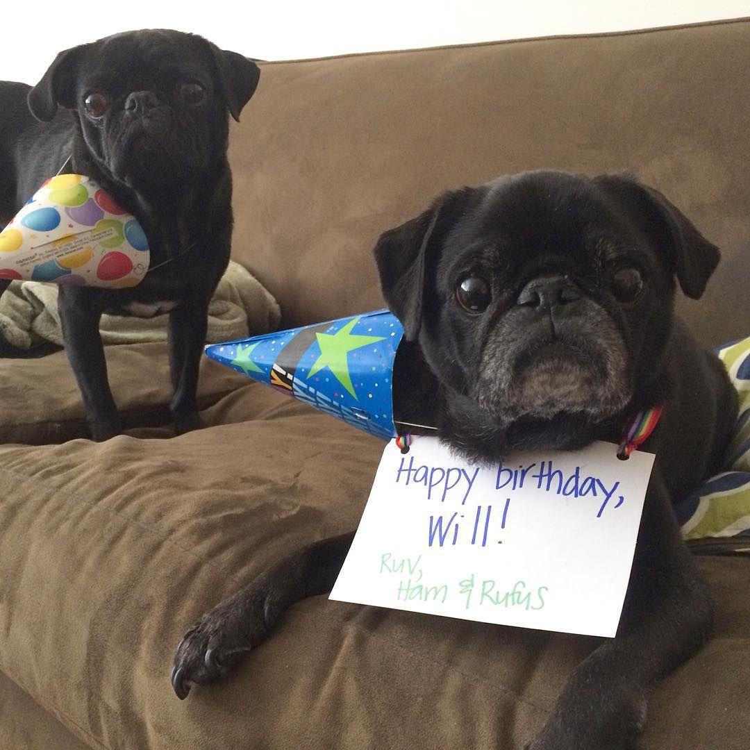 Happy birthday Will! (Benefitting Ohio Pug Rescue!) Pugs
