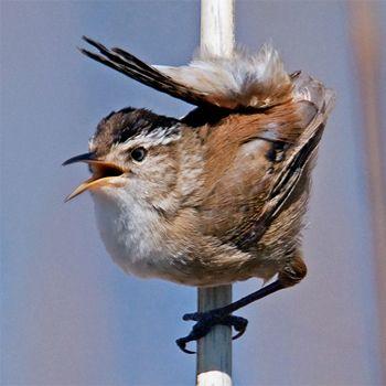 Birdfinders – Birdwatching Holidays – Canada