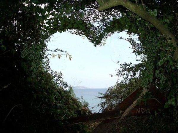 حقائق مذهلة قلوب رائعة الجمال تشكلت بواسطة الطبيعة 36 صورة Romantic Nature Heart In Nature Nature