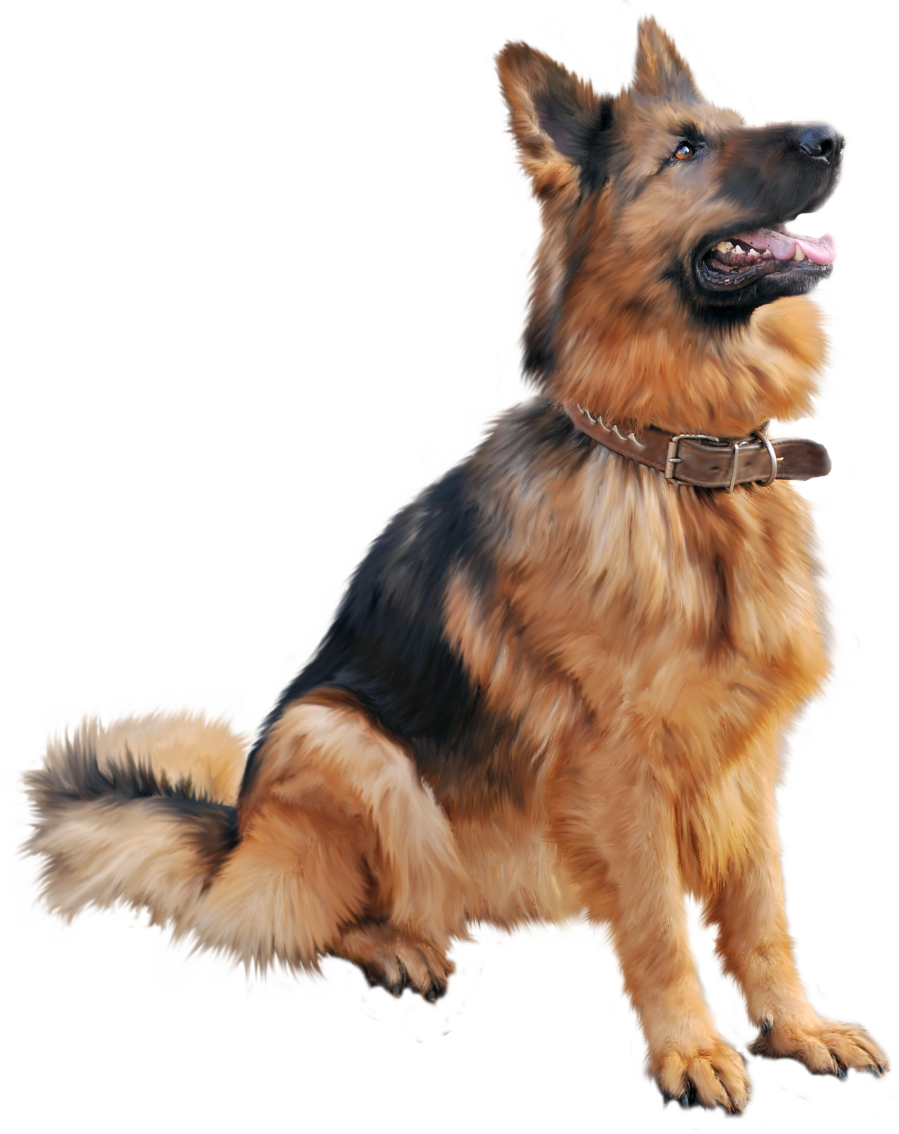 Cutest Dog Sitting Png Image Photoshop Images Puppy Pictures Dog Training Obedience
