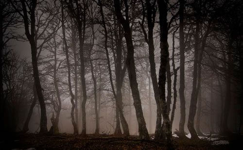 bosques-misteriosos