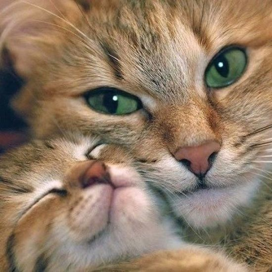 mama kitty love For more Mothers Day Cats, visit https://www.facebook.com/funholidaycats