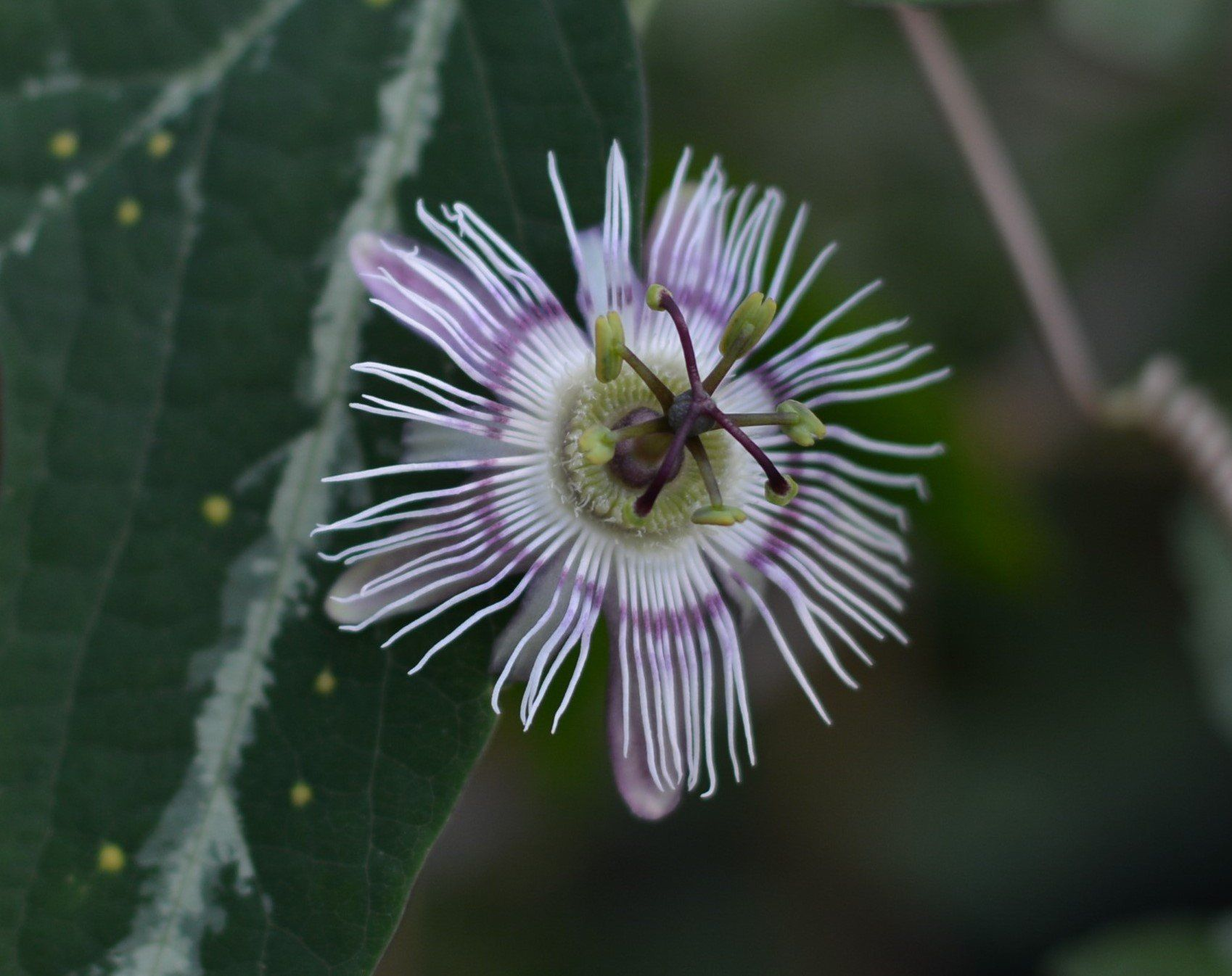 Pin By Michelle H On Passiflora O P How To Attract Hummingbirds Yellow Flowers Plants
