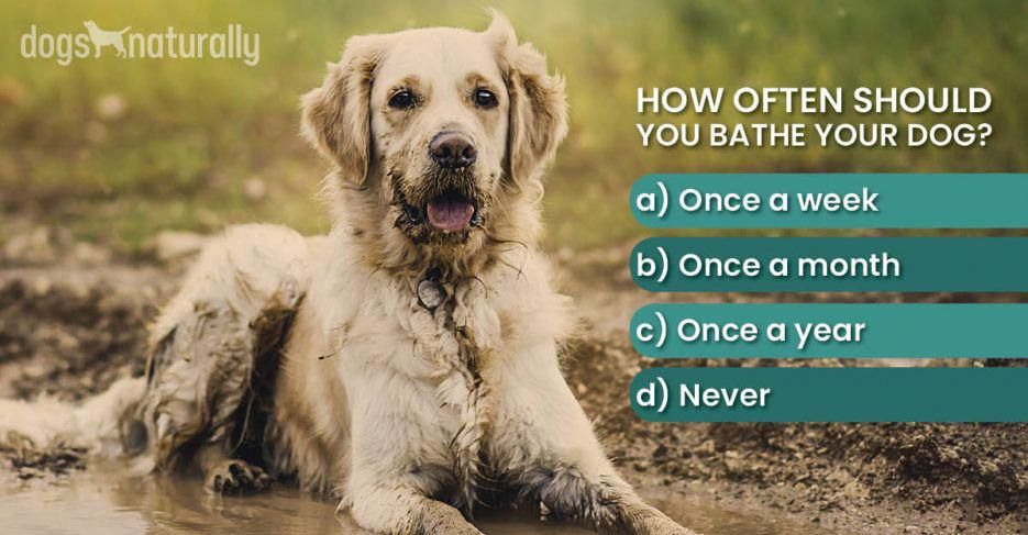 Dog Skin Health How Often To Bathe Them Shampooing Her Weekly
