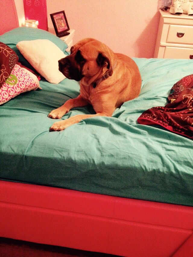 My new dog likes my bed more than I do
