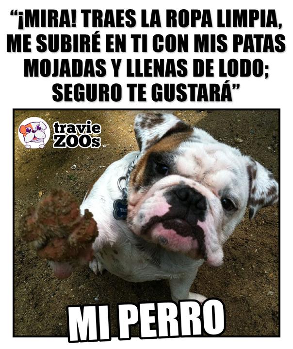 Que Detalle Muchas Gracias Perrito No Te Hubieras Molestado Memes Perros Animales Frases Mascotas