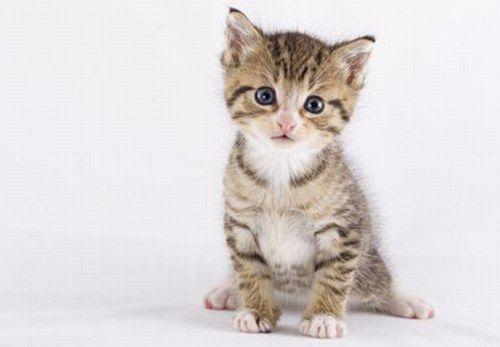 Süße kleine Racker Katzenbabys, Katzen und Tierfotografie