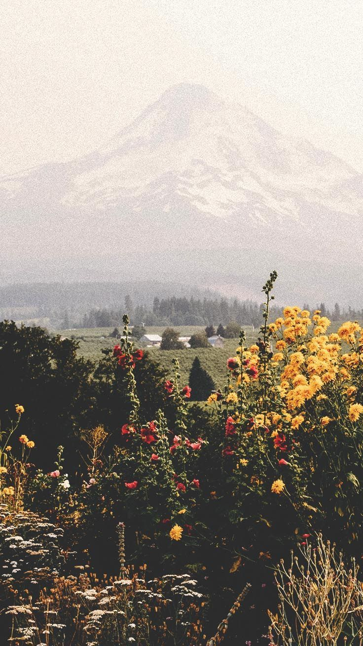 Photo of Beautiful mountains with wild flowres