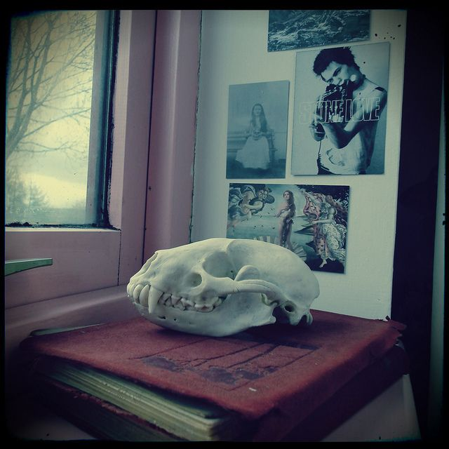 my badger skull, vintage books, sid vicious, window sill, interiors