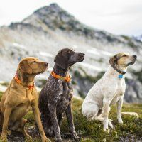 How to Pick and Train the Ultimate Adventure Dog