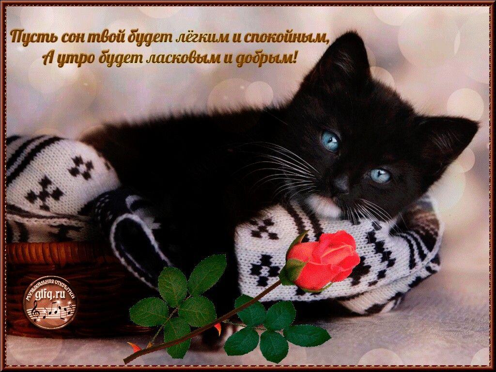 Открытки котят спокойной ночи