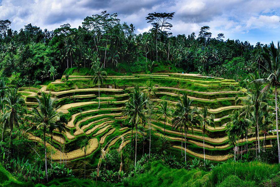 Hasil gambar untuk Sawah Tegalalang, Bali