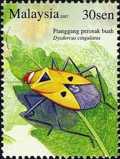 Malaysia Stamp - Insects Series 30sen Fruit Bug