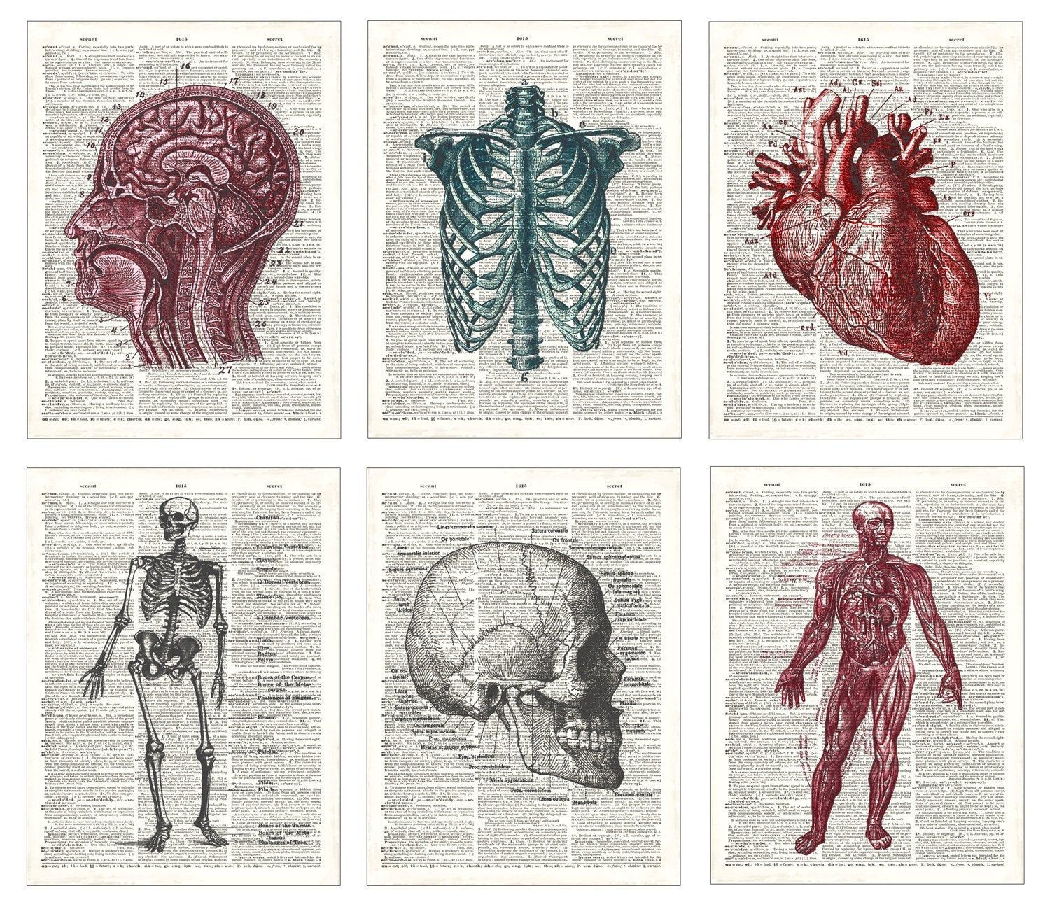 Anatomy Dictionary Prints, medical diagram art prints, Doctor gift, Anatomy drawings home decor, doctors office decor, Buy 4 gt 2 free!