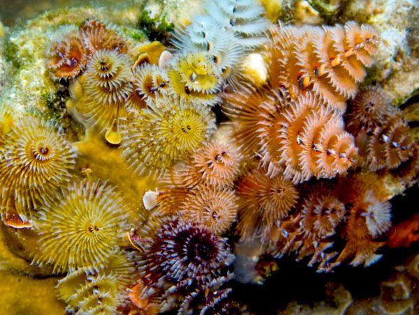 Finsaquaticsusa Marine Life Marine Animals Marine