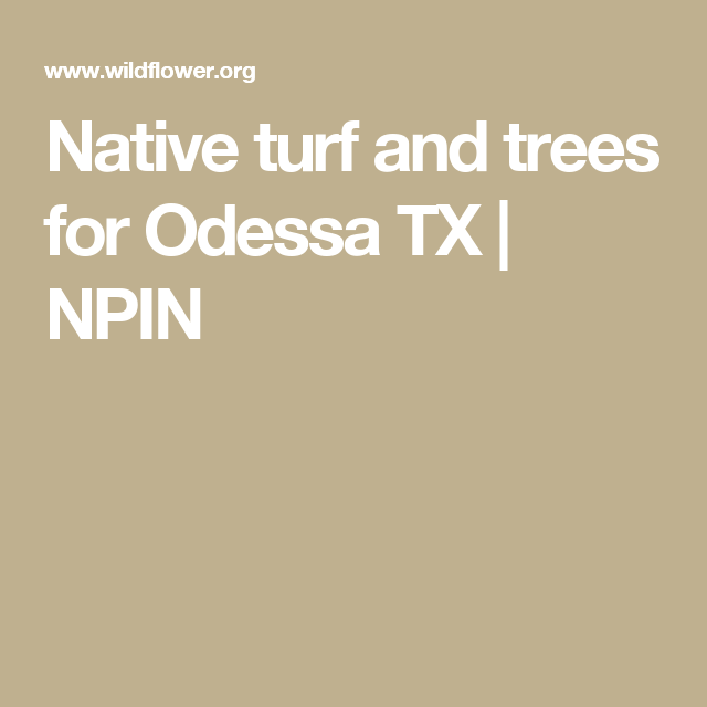 Native turf and trees for Odessa TX   NPIN
