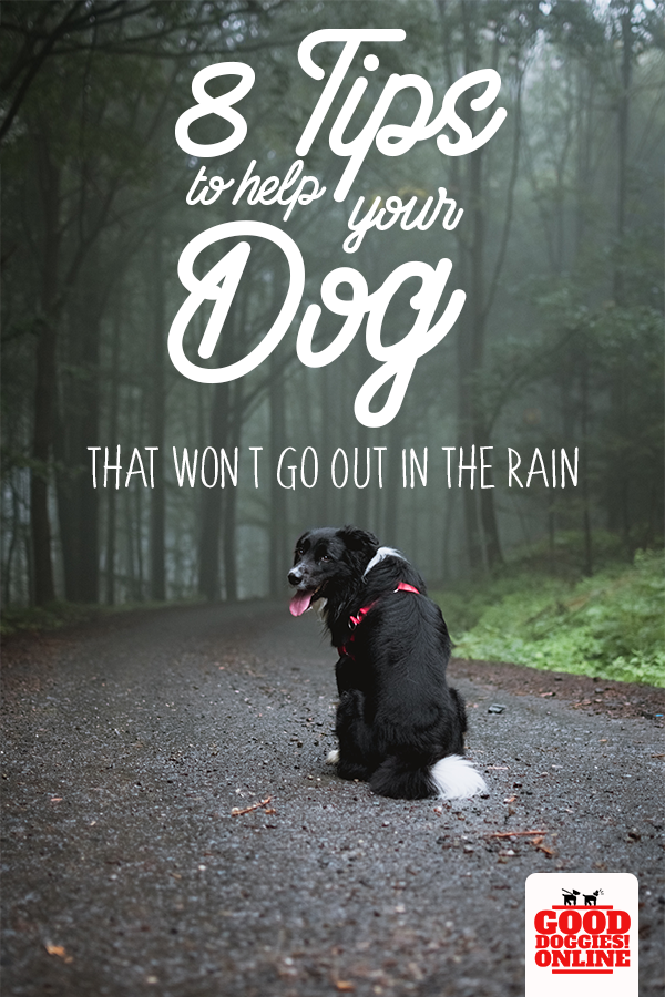 8 Tips To Help Your Dog That Won T Go Out In The Rain Dogs Your Dog Dog Potty Training