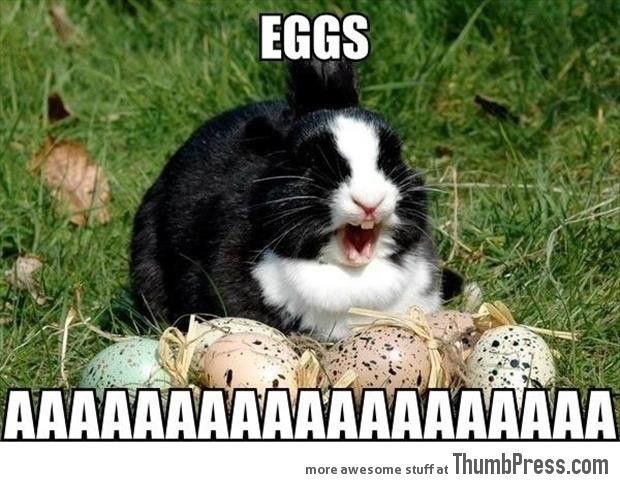 45 Absolutely Hilarious Pictures of Animals to Make You Laugh   See more about funny animal pictures, animal pictures and easter bunny.
