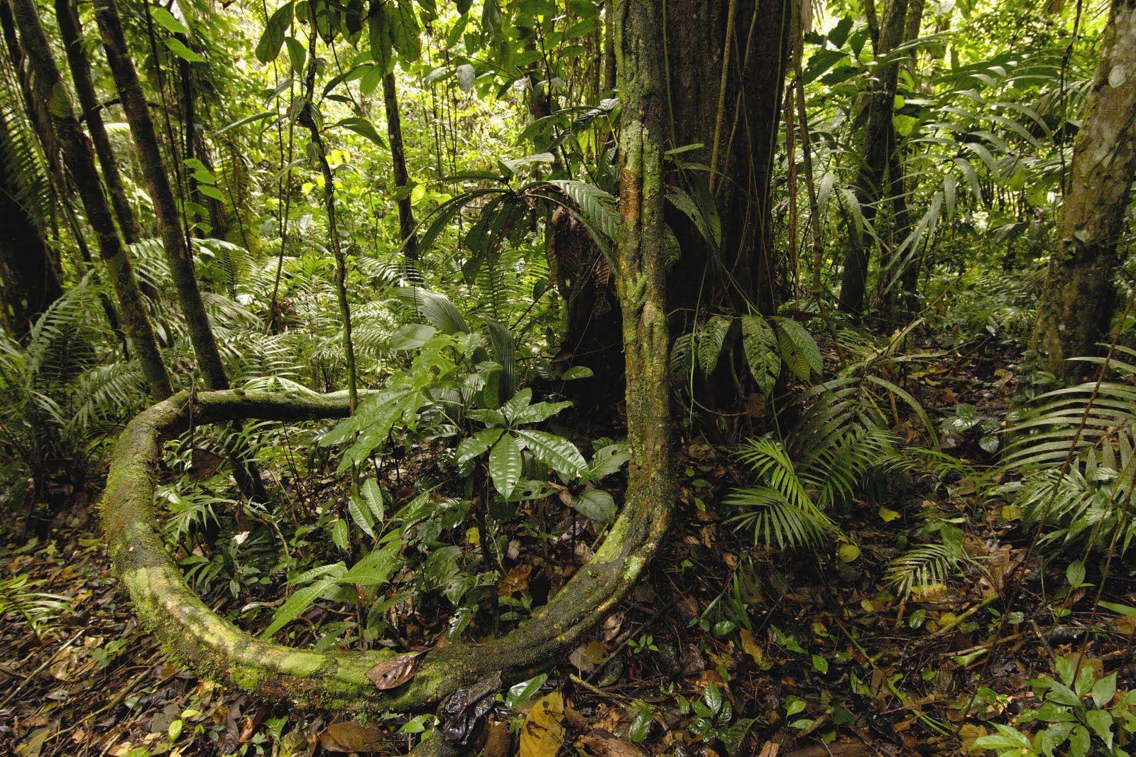 Amazon Rainforest Amazon Rainforest Rainforest Nature