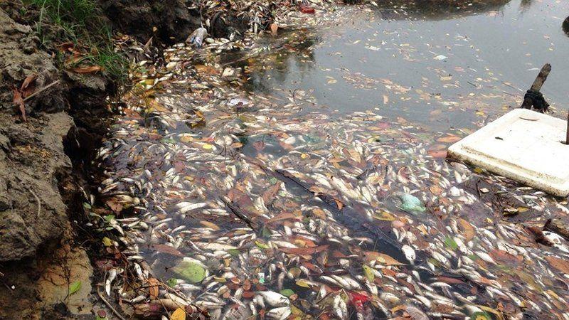 water pollution in vietnam