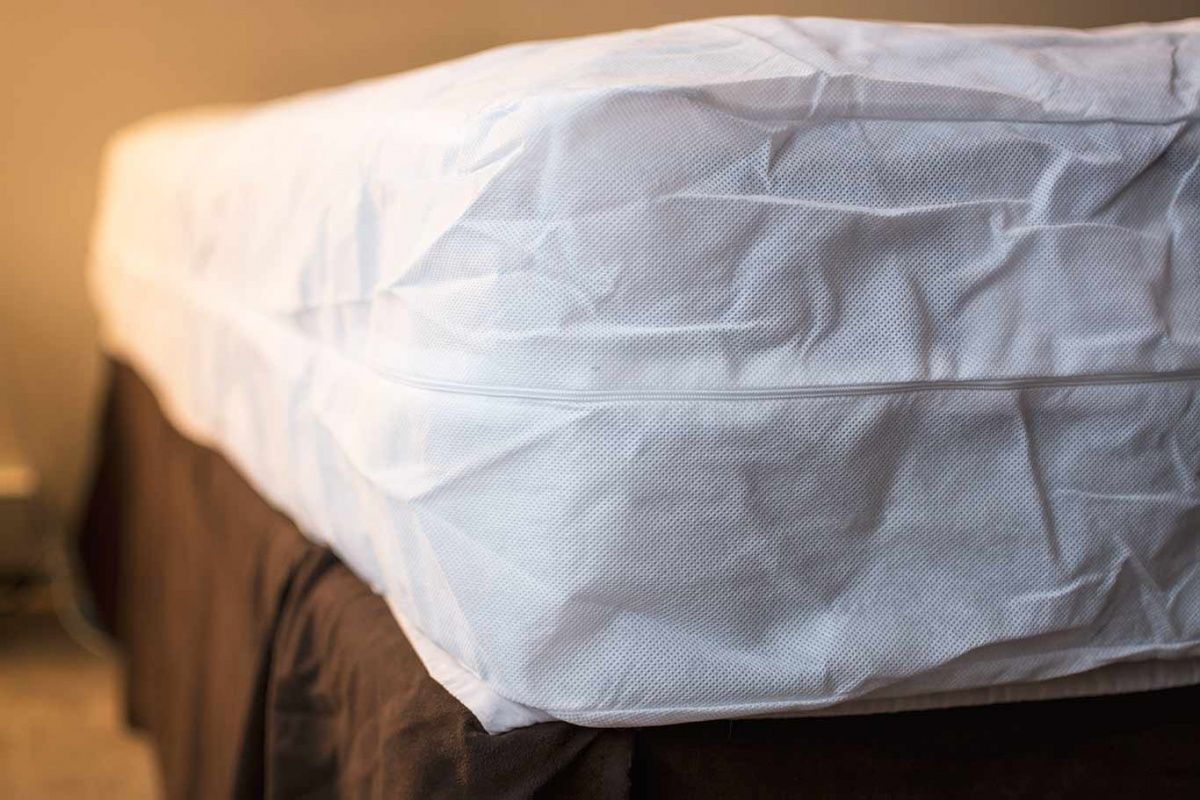 17 Easy Tips To Prevent Bed Bugs Catseye Pest Control