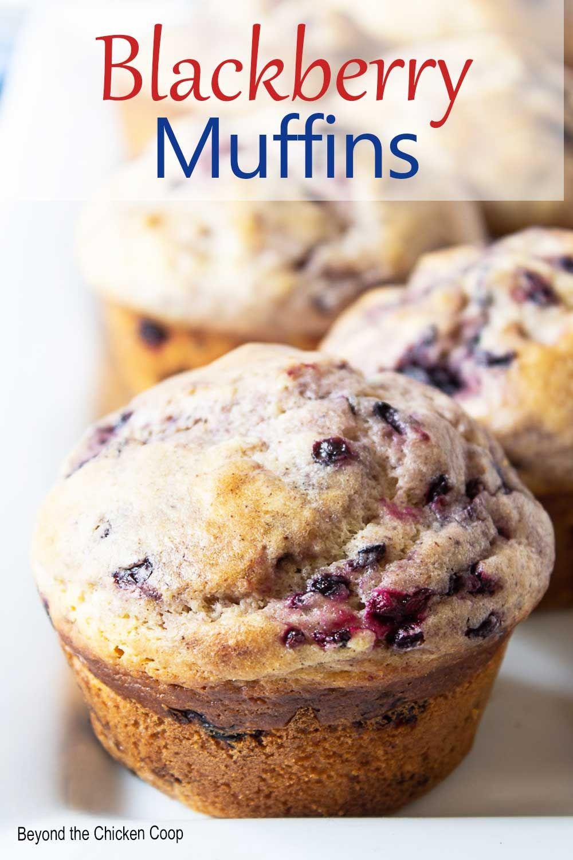 Blackberry Muffins Recipe In 2021 Blackberry Muffin Berries Recipes Muffin Recipes Blueberry