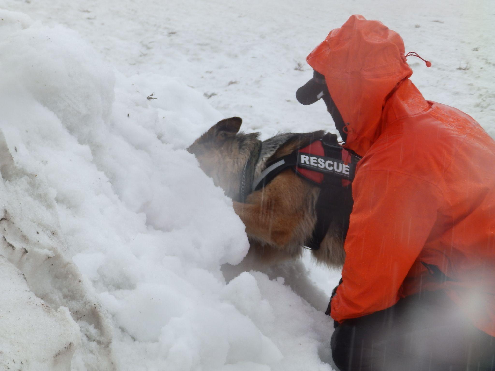 雪崩救助犬訓練