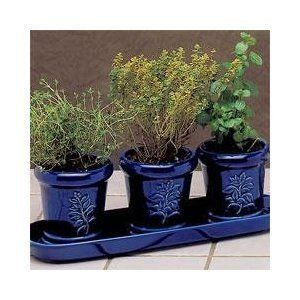 French Herb Garden Trio With Organic Soil Pellets Herbs 400 x 300