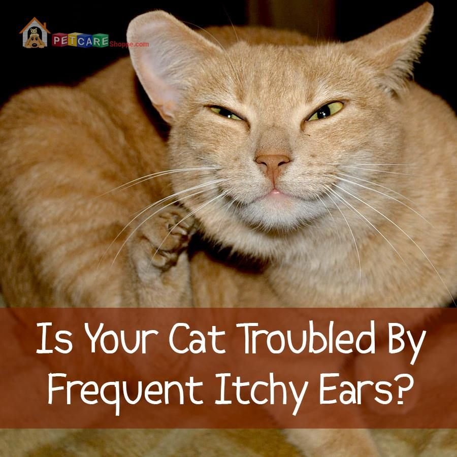 Pin by on Cat Care Cats, Cat health, Pets